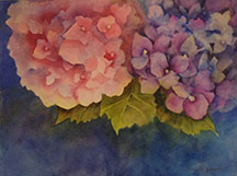 Hydrangeas, By Debbie Janssen